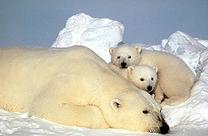 Varios de los proyectos quieren estudiar la fauna polar. (Foto: AP)