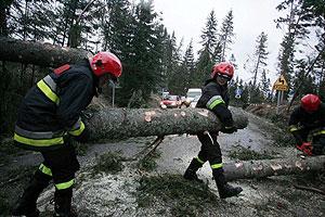 Bomberos polacos retiran árboles caídos en los montes Tatry. (Foto: EFE)