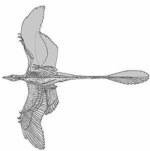 Los Primeros Dinosaurios Voladores Eran Biplanos Elmundo Es Jim blume y david woetzel son dos investigadores audaces que. los primeros dinosaurios voladores eran