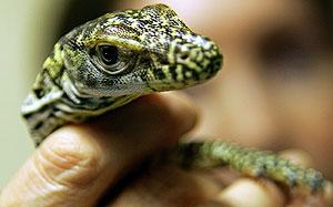 Una de las crías de Flora. (Foto: REUTERS)