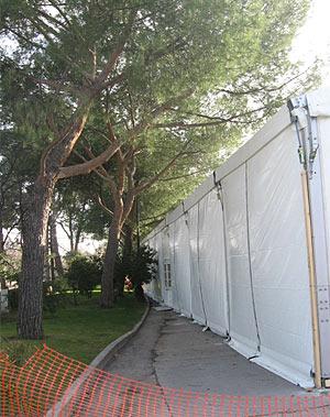 Imagen de los árboles dañados por la instalación de una carpa de Cibeles. (Foto: R. B.)