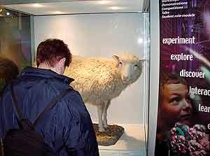 Un chico contempla a Dolly, disecada, en el Museo de Edimburgo. (Foto: EL MUNDO)