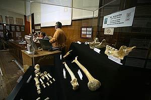 Algunos de los huesos del yacimiento de El Sidrón. (Foto: Kike Para)