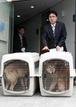 Los científicos, con las dos lobas clonadas. (Foto. AP)