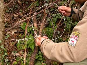 A veces, los cazadores utilizan lazos con cables de acero para cazar osos. (Foto: FAPAS)