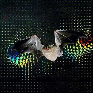 Las flechas de colores muestran las turbulencias generadas por el aleteo de los murciélagos. (Foto: Science)
