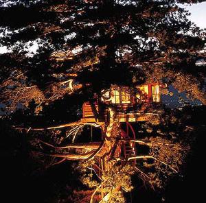 Casa situada en un enorme arbusto. (Foto: Éditions de la Martière) [Ver álbum]