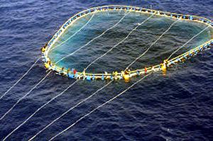 Los inmigrantes se agarran a las redes de la pesca del atún para ser rescatados. (Foto: AP)