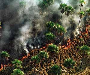 Frente de un incendio en una selva tropical (Foto: Dario Lopez-Mills. AP