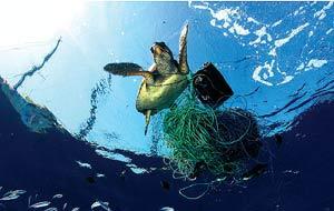 Una tortuga atrapada en una red de pesca. (Foto: Greenpeace)