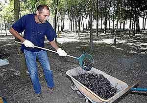Un agricultor recoge topillos en Fresno el Viejo (Valladolid). (Foto: Pablo Requejo)
