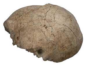 Cráneo de Homo erectus (Foto: National Museums of Kenya)