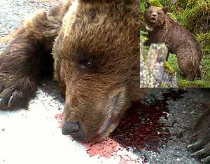 La osa muerta, con una imagen de 2006 (Foto: AFP)