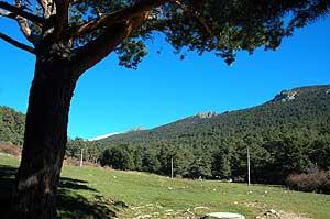 Bosque y pradera de la Sierra de Guadarrama, una opción preferible al cultivo de plantas para la producción de biocombustibles (EL MUNDO)