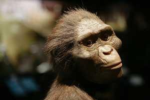 Reconstrucción artística de 'Lucy', la más famosa australopithecus, actualmente de 'gira' por Estados Unidos (Foto: Michael Stravato)