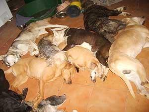 Perros muertos en el interior de la perrera (Foto: El Refugio)