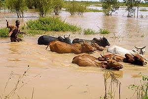 Un campesino empuja su ganado durante las inundaciones del pasado septiembre, en Budalangi, Kenia (Foto: EPA/STR)