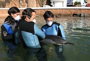 Uno de los delfines varados en Cataluña es asistido (Foto: FCRAM)