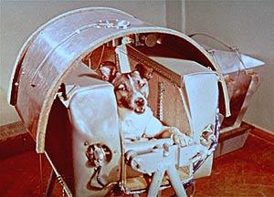 Imagen de la perra Laika en la cápsula espacial. (Foto: AP)