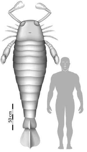Comparación entre el tamaño del escorpión marino y un ser humano. (Foto:'Biology Letters')