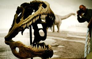 Cabeza de esqueleto de dinosaurio (FOTO: Eloy Alonso)