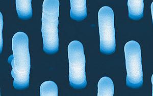 Un conjunto de nanotubos vistos con un potente microscopio (Foto: NASA)
