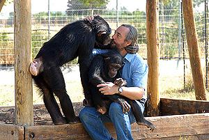El primatólogo Guillermo Bustelo con dos de los chimpancés del centro. (Foto: Alfredo Merino)