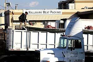 Un trabajador de la empresa Hallmark, descragando carne de un camión. (Foto: AP)