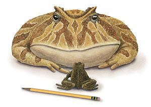 Ilustración del animal. (Foto: AP)