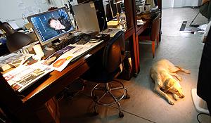 Luna, la perra de CuldeSac, un miembro más del equipo. (Foto: Alberto Di Lolli)