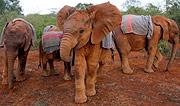 Crías de elefante en la Fundación Davis Sheldrick, Nairobi. (Foto: EFE)