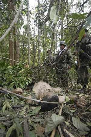 Tropas ecuatorianas descubren uno de los cadáveres que dejó la operación contra 'Raúl Reyes'. (Foto: AP)