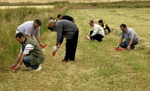 Un grupo de agricultores coloca tubos con veneno en un campo de Palencia. (Foto: Begoña Rivas)