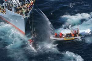 Un barco de Greenpeace intenta impedir la caza de una ballena durante la campaña de 2005. (Foto: Reuters)