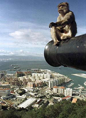 Un mono de Gibraltar, en una imagen de archivo. (Foto: Anton Meres | REUTERS)