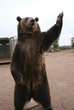 Rocky, el oso protagonista de la historia. (Foto: EFE)