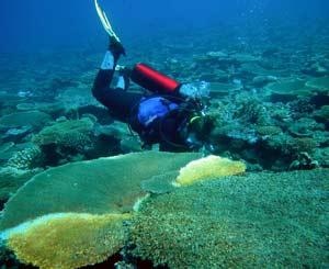 Un submarinista compueba el estado de los corales, algunos afectados de blanqueamiento. (Foto: FBBVA)