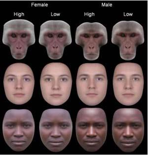 Las caras coresponden a macacos, europeos y hazda. Las dos primeras columnas son hembras (la primera alta y la segunda con baja simetría) y las dos segundas machos (alta y baja simetría, respectivamente). (Foto: PLoS ONE)