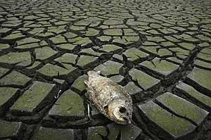 Pez muerto a causa de la sequía en un embalse de China. (Foto: Reuters)
