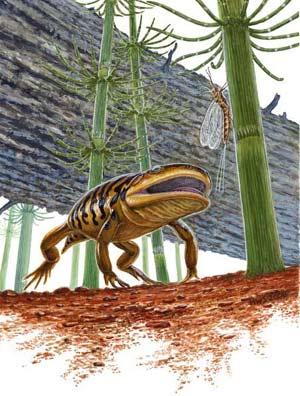 Recreación de un 'Gerobatrachus hottoni'. (Foto: 'NATURE')