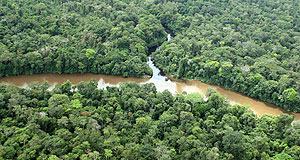 Vista del Amazonas, la zona del mundo con más biodiversidad. (Foto: José F. Ferrer)