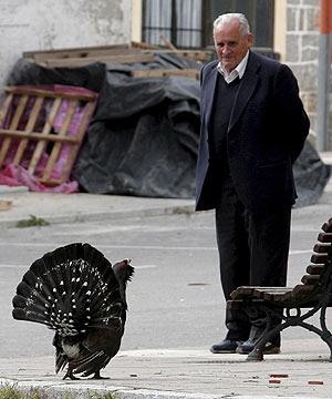 El urogallo 'Mansín' trata de congeniar con humanos en la localidad de Tarna. (Foto: EFE)