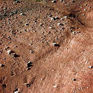 Imagen de la superficie de Marte captada por la sonda estadounidense 'Phoenix', que llegó exitosamente al planeta rojo, comenzando una misión de tres meses para evaluar si el hielo subterráneo del planeta alguna vez fue soporte de vida. (Foto: NASA)