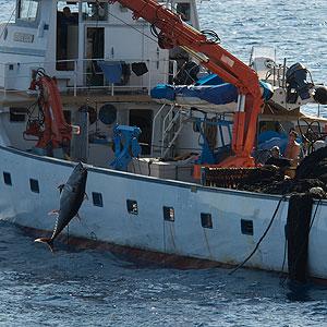 Barco pesquero de atunes rojos (Foto : Oceana)