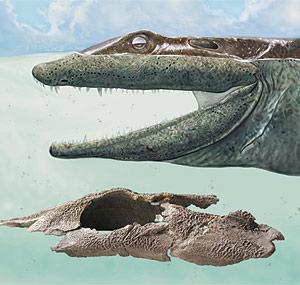 Reconstrucción artística del pez prehistórico, junto a una foto del cráneo hallado. (Foto: Nature)