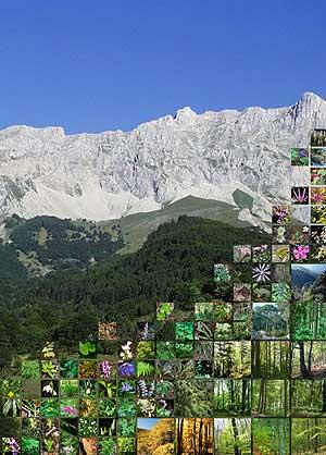Fotomontaje de la cumbre Bure de los Alpes franceses junto a varias especies de plantas de montaña. (Foto: Science)