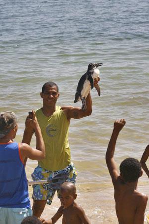 Un joven sostiene un ejemplar de pingüino llegado a la playa de Porto da Lenha en Salvador de Bahía, Brasil. (Foto: Arestides Baptista)