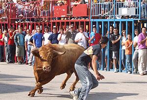 Un joven intenta 'burlar' a un astado en un festejo de 'bous al carrer'.