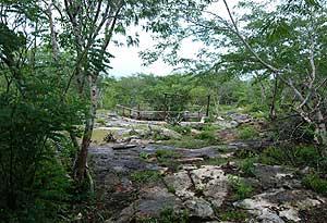 Entrada de lo que arqueólogos mexicanos suponen la red subterránea de cuevas que los antiguos mayas. (Foto: EFE)