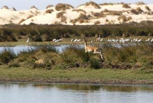 Laguna de Santa Olalla, en Doñana, lugar donde en septiembre soltarán dos ejemplares de lince traídos desde Sierra Morena. (Foto: Eduardo Abad)